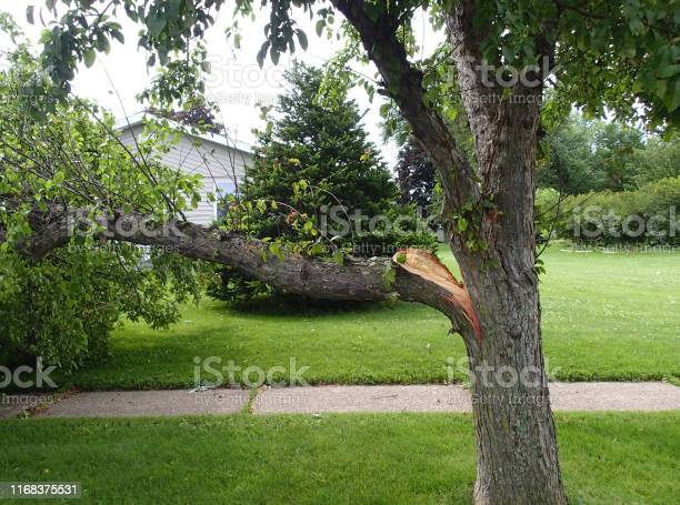 Photo of Broken tree limb from storm damage