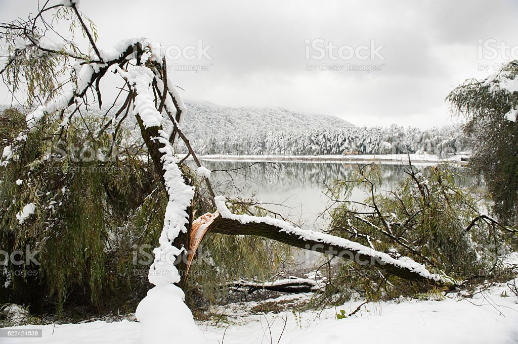 broken tree on   background of   lake and snow-covered trees stock photo