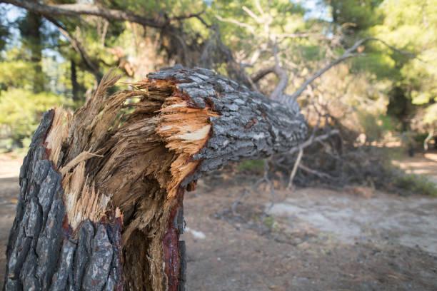 Broken Tree Broken Tree fallen tree stock pictures, royalty-free photos & images