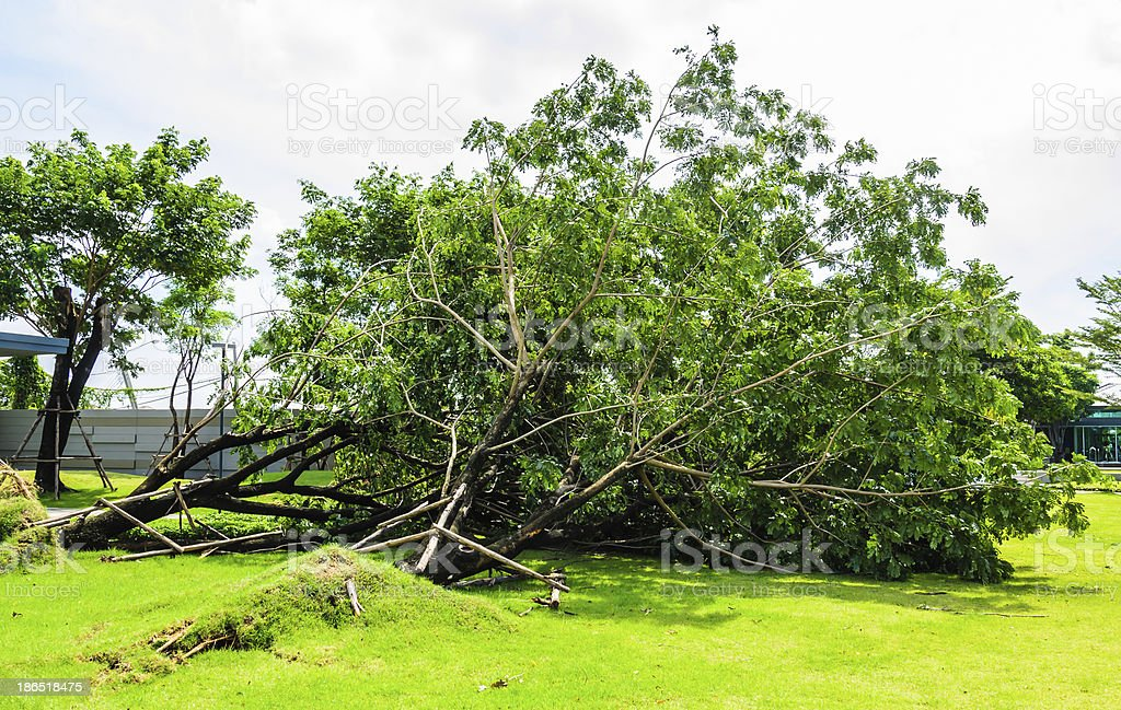 Broken tree royalty-free stock photo