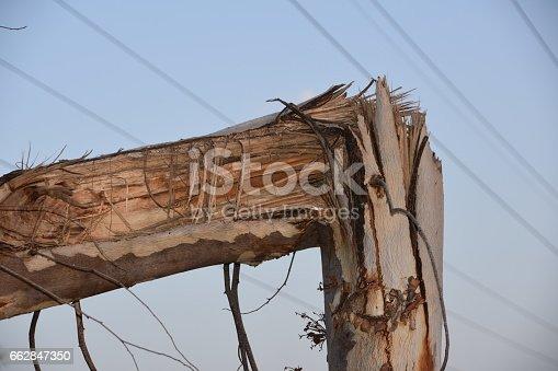 istock broken tree 662847350