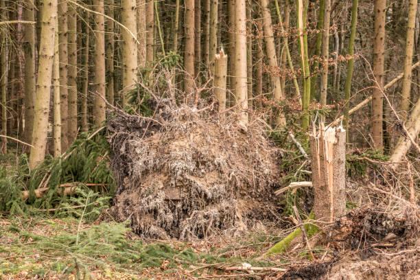 Gebrochene Bäume nach einem großen Sturm mit großen Squalls – Foto