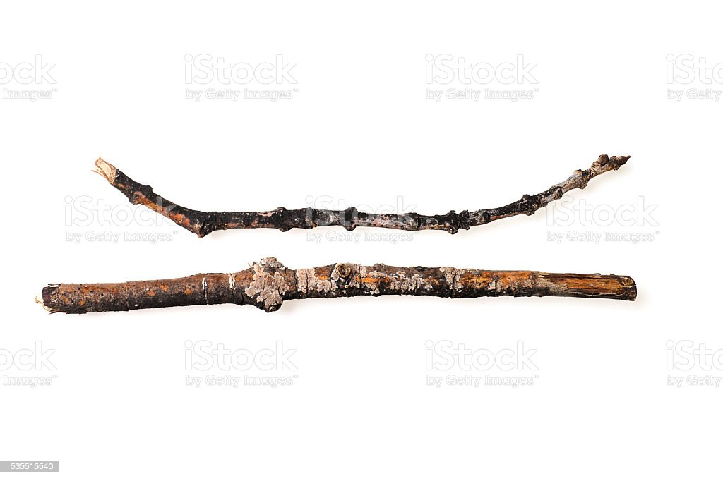 Broken Twigs Isolated on White Background stock photo