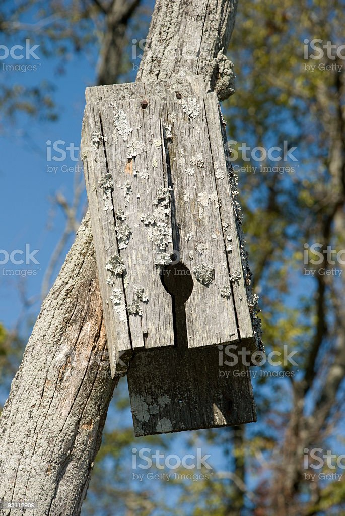Broken Wild Bird Nesting Box - Royalty-free Ahşap Stok görsel