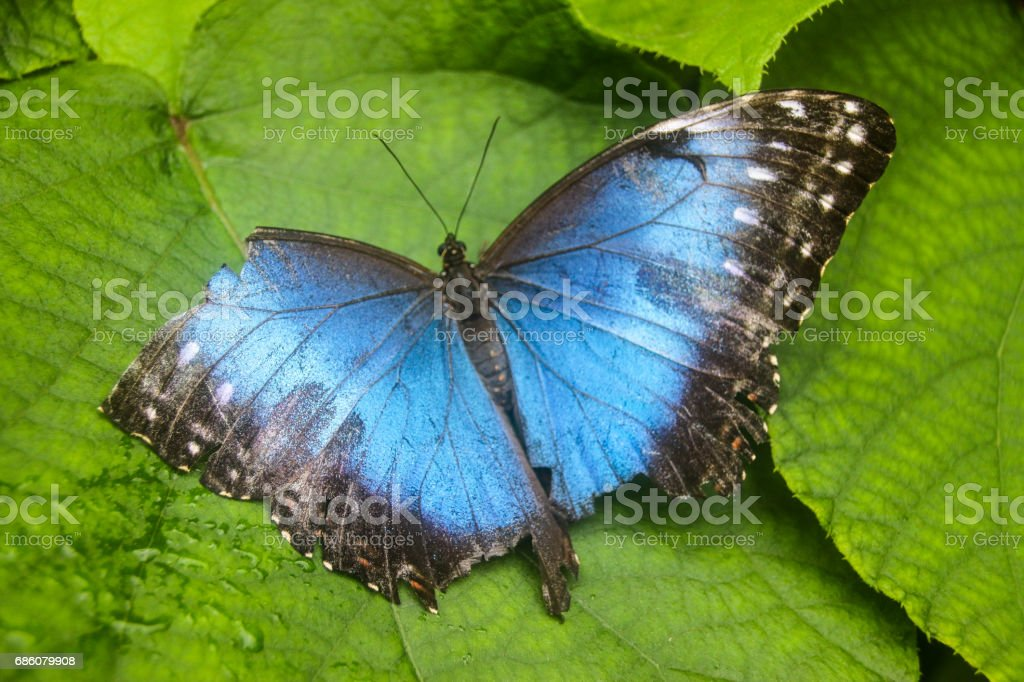 Broken wing royalty-free stock photo