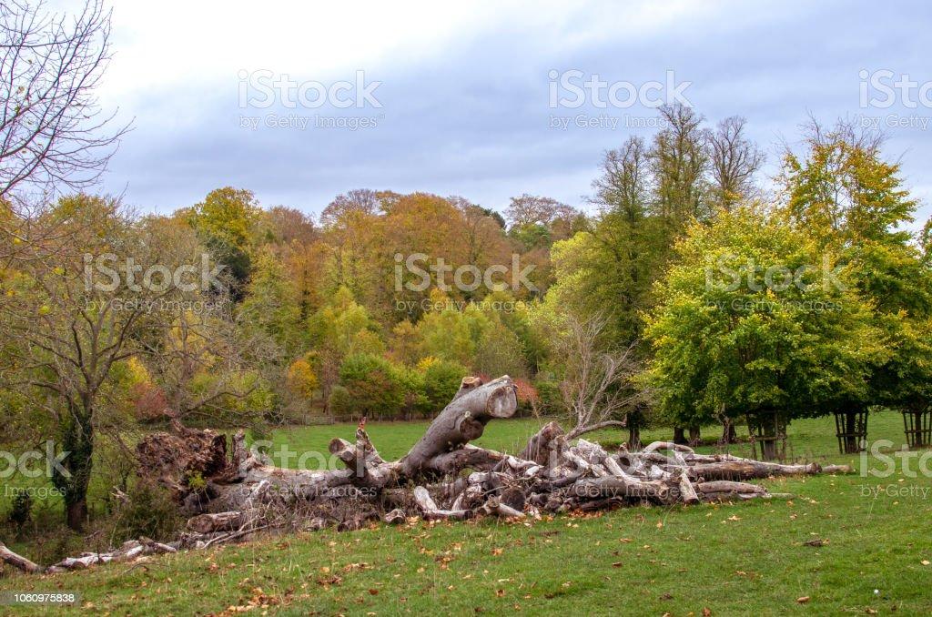 Broken wood in the autumn beauty stock photo