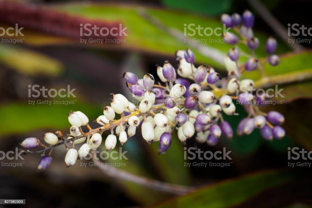 Bromelia - foto de acervo