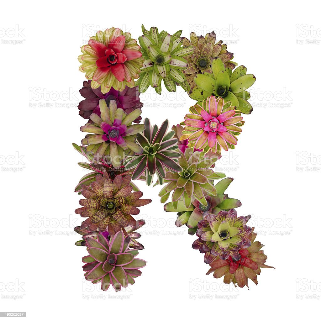 bromeliad flower letter stock photo