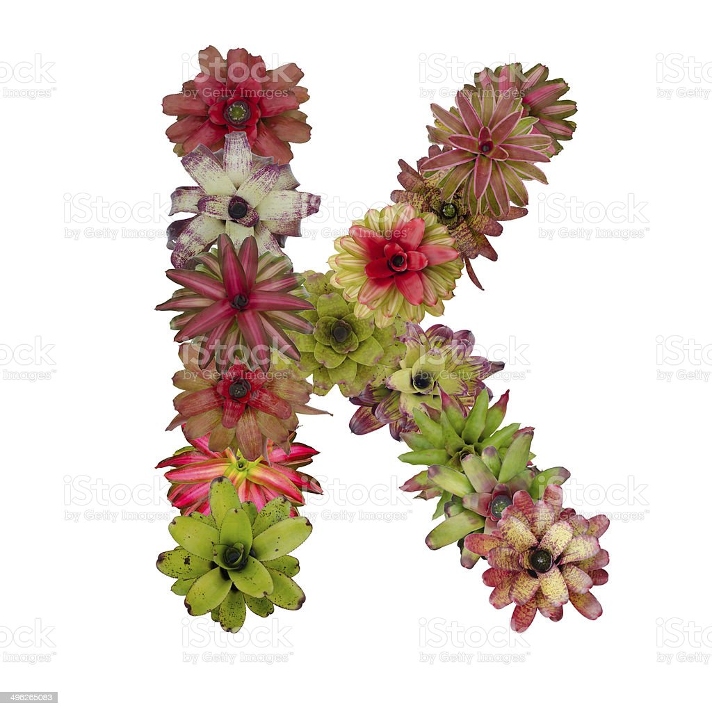 bromeliad flower letter stock photo