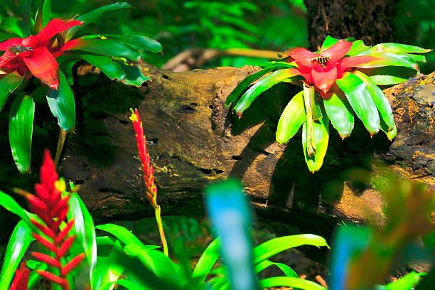 Bromeliad on a stem tree, Amazon tropical Rainforest, Brazil stock photo