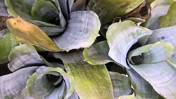 Bromeliads stock photo