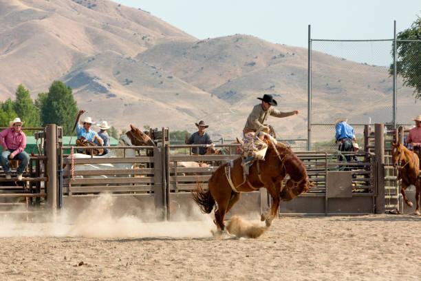 Bronc rider in a rodeo picture id840030940?b=1&k=6&m=840030940&s=612x612&w=0&h=pb3wb4bwm2jjhccukrwzx7bub2vkw9s3nbr7evwsqai=