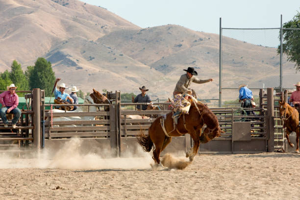 Bronc Rider in a Rodeo stock photo