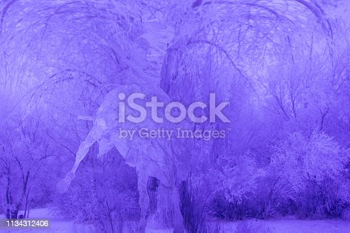 A composite of two images, including trees full of frost with a bronc rider super imposed in it.