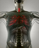 istock Bronchi, human anatomy lungs, futuristic scan technology. 542006948