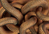 Bronze coloured snakes abstract background. 3D illustration