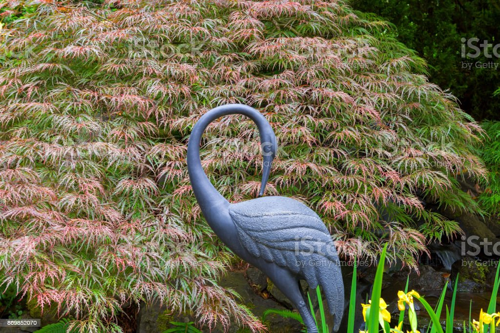 Bronze crane statue sculpture by Red Japanese Maple Tree in home garden backyard stock photo