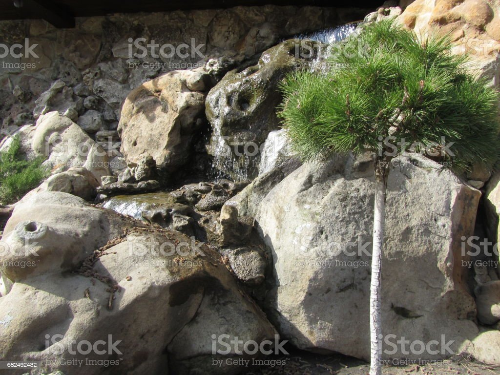 Brook among the stones and a small pine foto de stock libre de derechos
