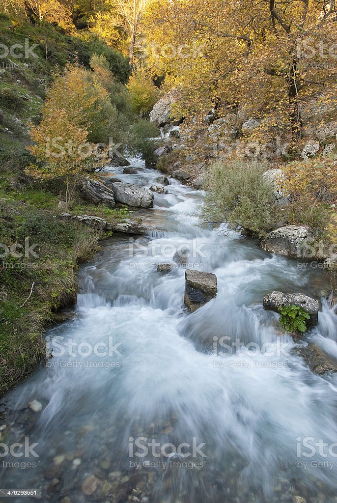 Brook in forest stock photo