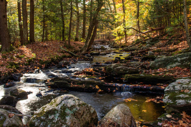 Brook through the forest in autumn stock photo