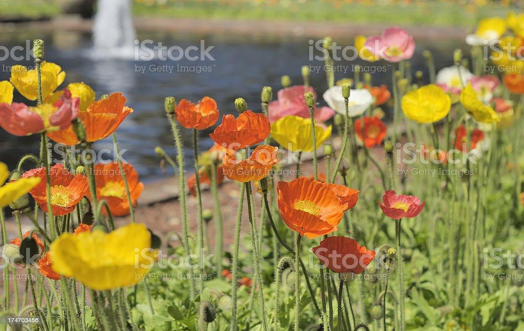 Brookgreen Gardens, South Carolina royalty-free stock photo