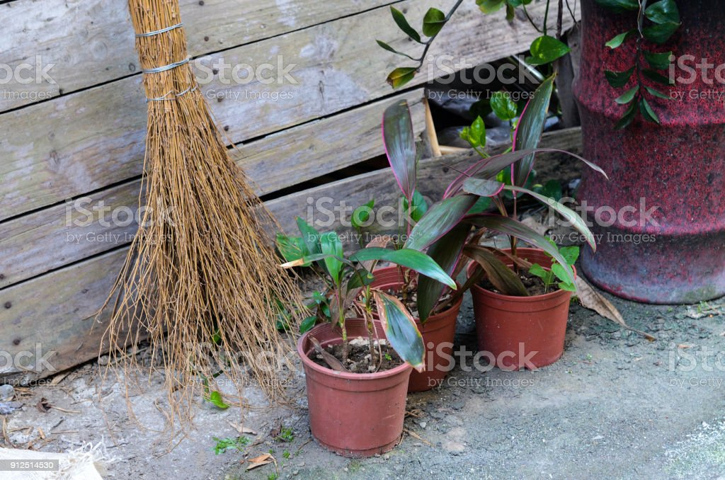 broom Potted plants Horticulture garden stock photo