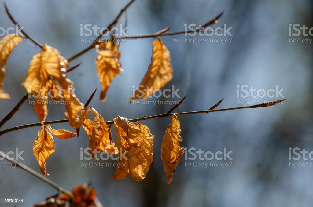 Broomy Autumn Leaves royalty-free stock photo