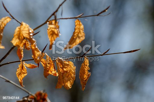 Broomy Autumn Leaves Stock Photo & More Pictures of Animal Wildlife