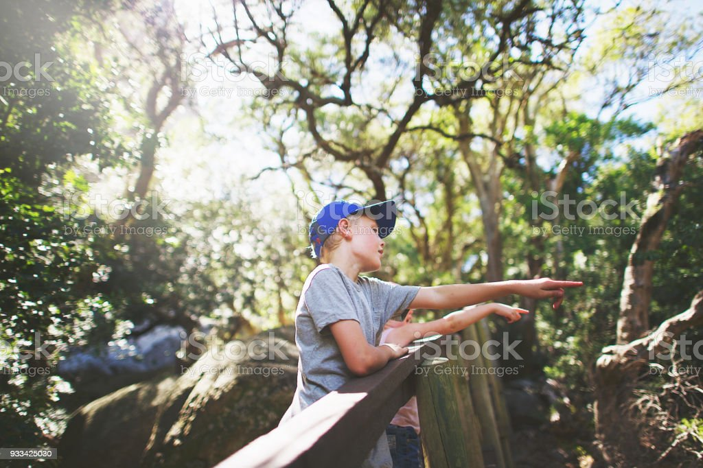 Brother and sister pointing in forest stock photo