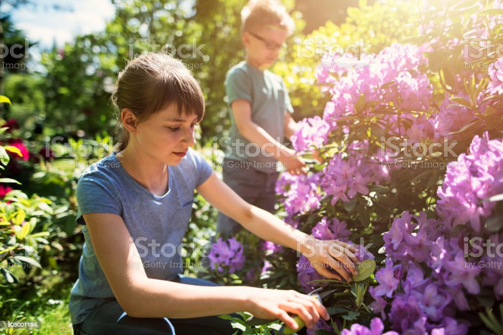 Brother and sister tending to flowers in garden stock photo