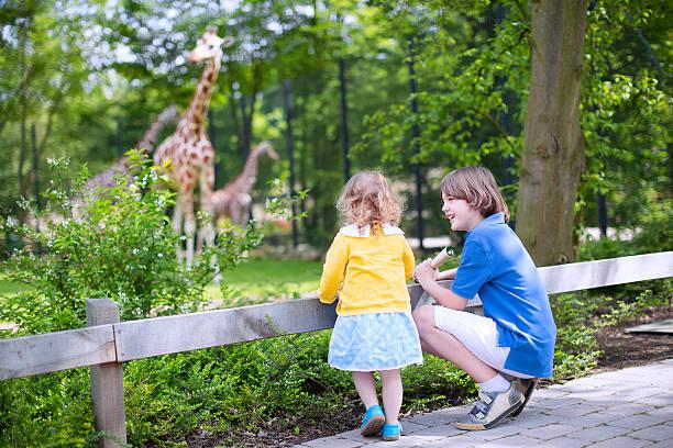 Hermano y hermana viendo jirafas en el zoológico - foto de stock