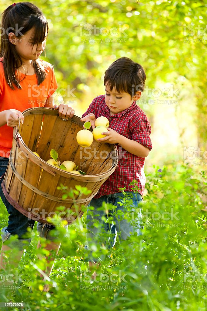 Brother loading basket of apples with sister stock photo