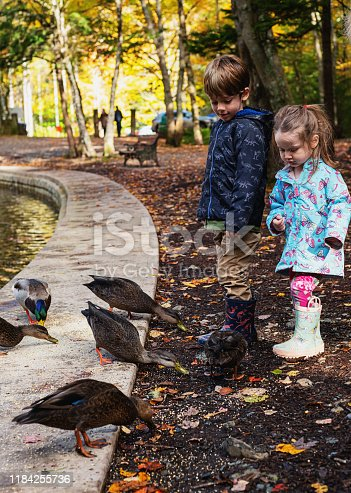 Brother & sister feeding ducks at a public park on an October afternoon.
