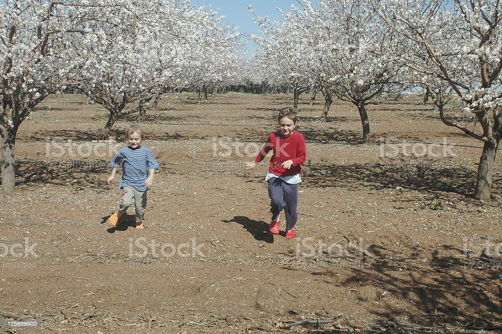 brothers running in Almond blooming plantation royalty-free stock photo