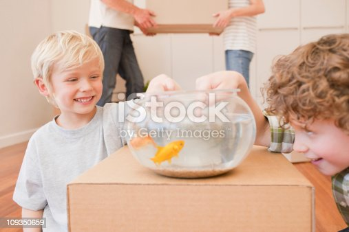 109350576 istock photo Brothers teasing fish in fish bowl in new house 109350659