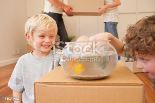 109350576 istock photo Brothers teasing fish in fish bowl in new house 171021437