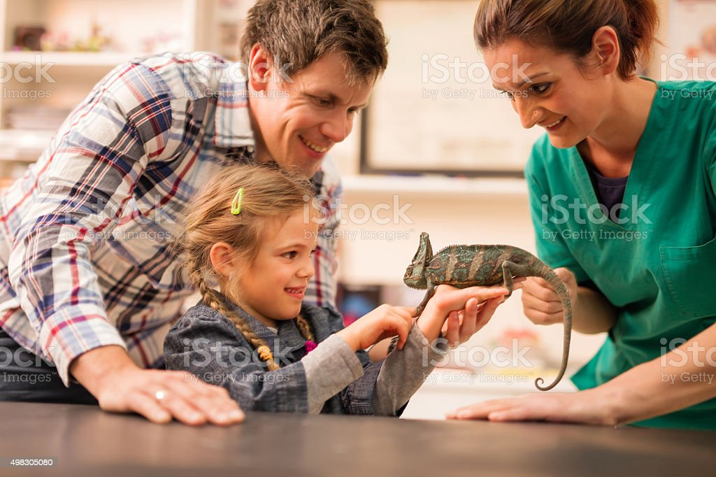 I brought my chameleon for you to examine it! stock photo