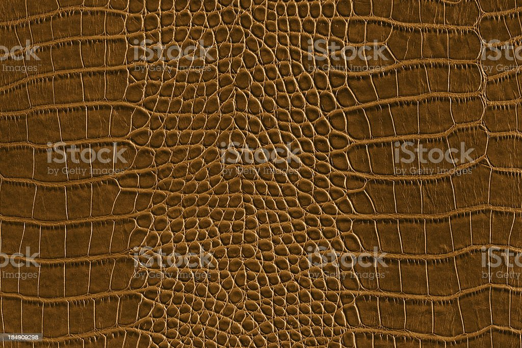 Brown alligator skin stock photo