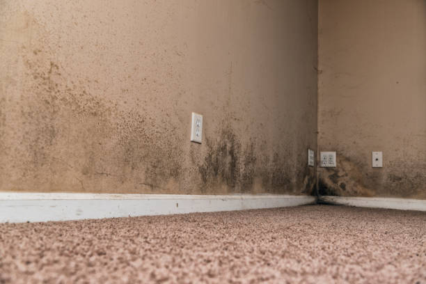 Brown and Black Mold on basement walls of a home stock photo