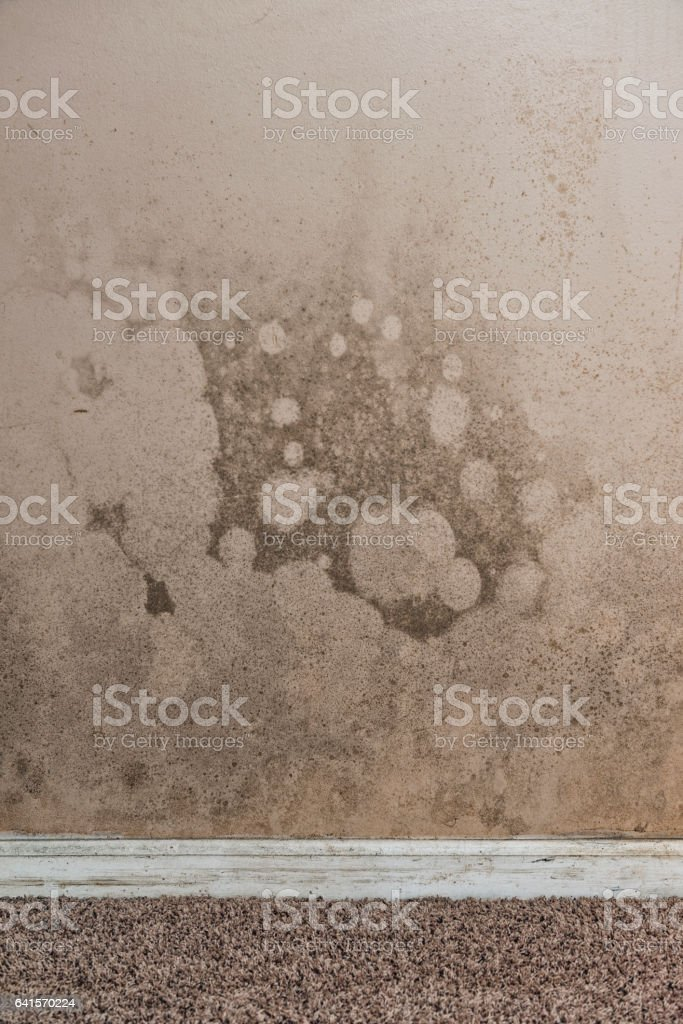 Brown And Black Mold On Basement Walls Of A Home Stock Photo Download Image Now Istock