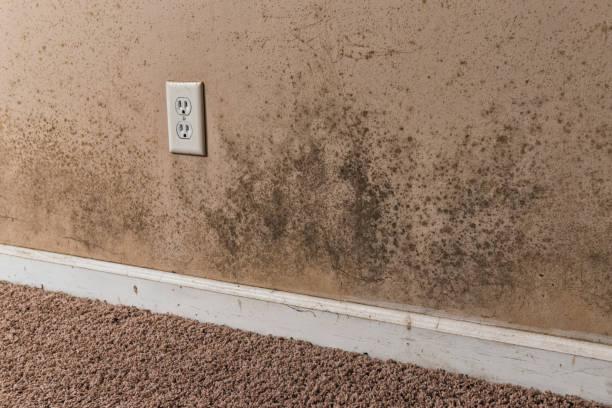 bruine en zwarte schimmel op de muren van de kelder van een huis - meeldauw stockfoto's en -beelden