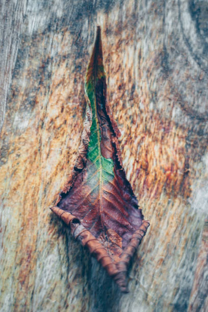 brown and green leaf on the wooden background photo – zdjęcie