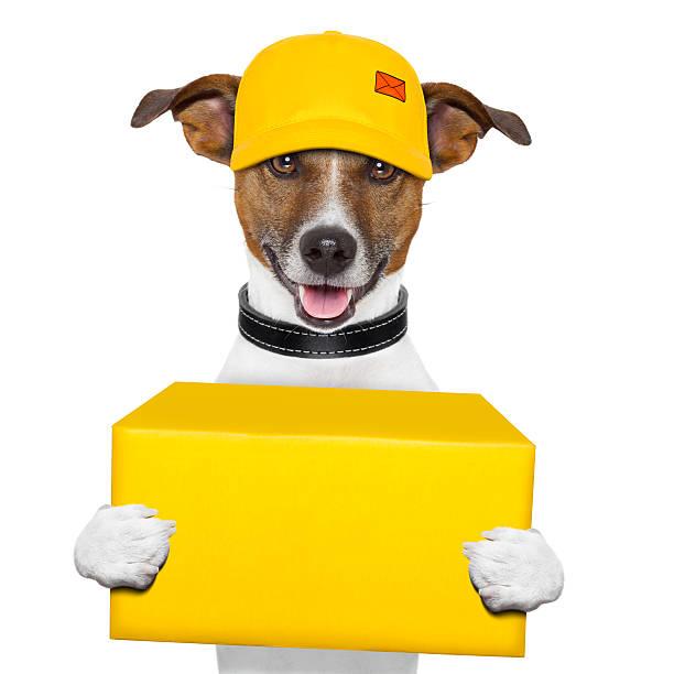 Hund Versand nach – Foto