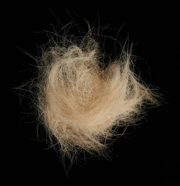 Brown animal tuft Brown animal tuft close up view isolated on black background animal hair stock pictures, royalty-free photos & images