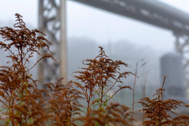 Brown autumn grass in misty urban landscape stock photo