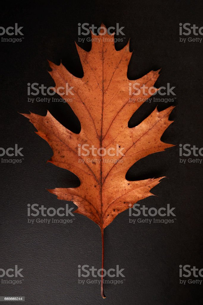 Brown Autumn leaf isolated on a black background, vertical ロイヤリティフリーストックフォト