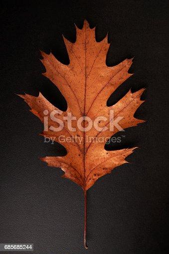 Brown Autumn Leaf Isolated On A Black Background Vertical - Fotografias de stock e mais imagens de Castanho