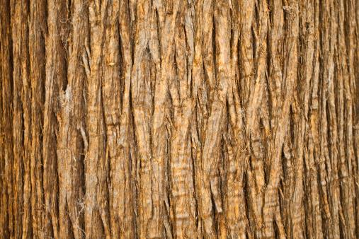 Brown Bark of Tree, Natural Pattern