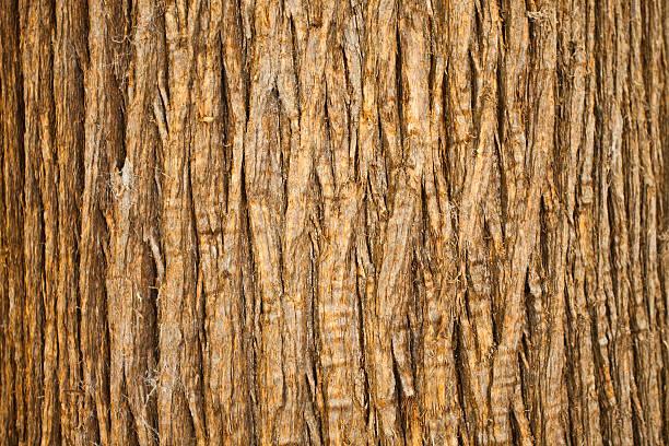 Brown Bark of Tree, Natural Pattern stock photo