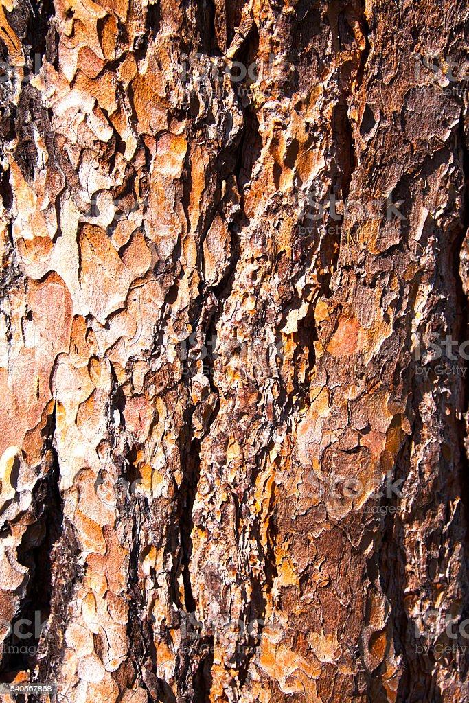 Brown Rinde – Foto
